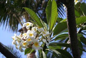 Come proteggere le piante tropicali dal freddo