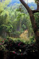 Rose che crescono sotto l'ombra di un albero