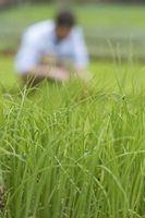 Uso tipico acqua per irrigare Grass Turf