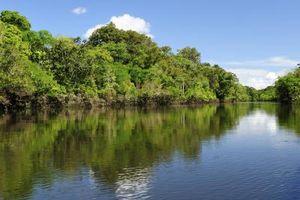 Le piante che vivono nelle acque dei fiumi Amazon