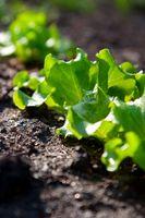 Come costruire organica del suolo per letti rialzati