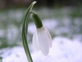 Quali sono alcune piante in vaso Buono a crescere in inverno intorno Knoxville, Tennessee?