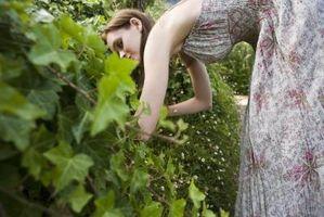 Quanto fertilizzante per Avvio di un giardino?