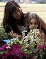 Come Trim Fiori e verdura Piante per la crescita massima