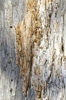 Ciò che gli animali mangiano termiti?