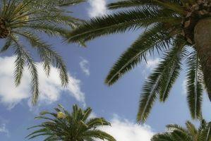 Macchie Fungo su Foglie di palma
