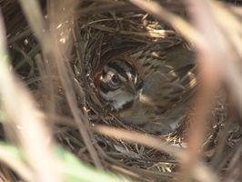 Come costruire diversi tipi di Bird Houses