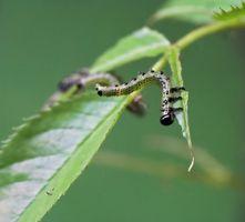 Problemi con lo spruzzatore Pest Control Pompe Roller