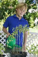 Quali liquidi Do I semi crescono meglio in?