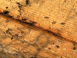 Acido borico per i problemi della formica
