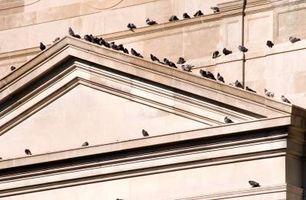 Come tenere gli uccelli da una sporgenza