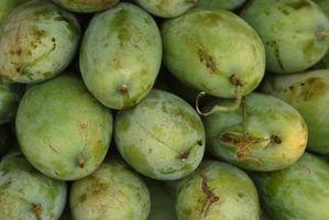 Spray Fungicida per alberi di Mango